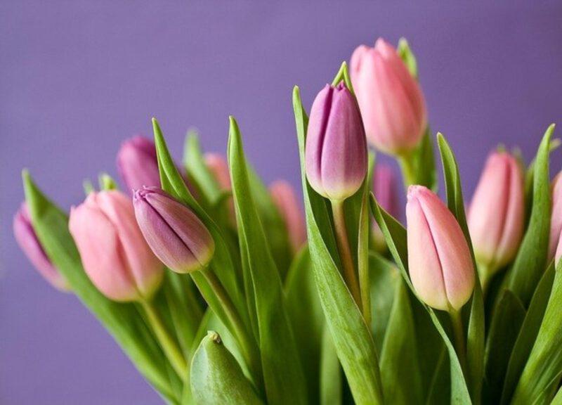 Jak dbać o wiosenne rośliny cebulowe