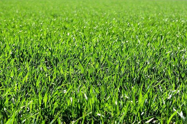 wertykulacja trawnika kiedy