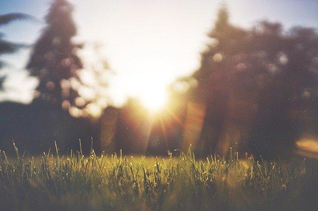 Podlewanie trawnika – co trzeba o tym wiedzieć?