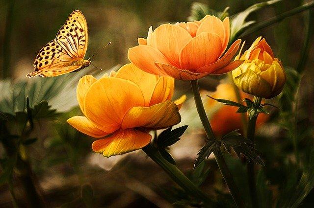 kwiaty z nasion do gruntu